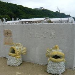 01さんご畑入口 70.jpg
