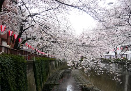 01桜*90.jpg