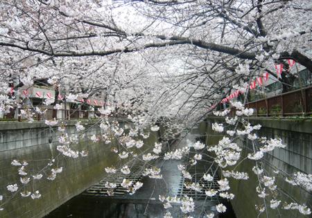02桜*90.jpg