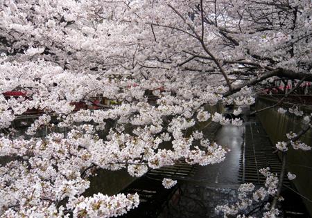 03桜*90.jpg