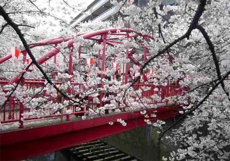 06桜 中の橋*90.jpg