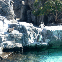 09フンボルトペンギン陸 70.jpg