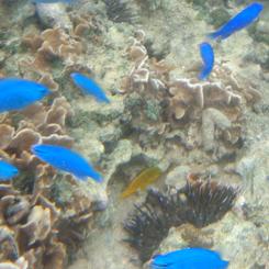09水中 ウニと黄色い魚70 3*.jpg