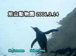 16旭山title 45*.jpg