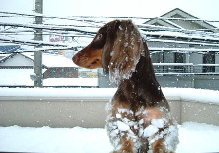 2006.02.21 雪で遊ぶ 90 8.9x12.7.jpg