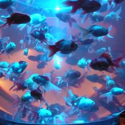 20金魚鉢 青 70.jpg
