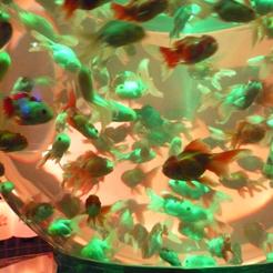 21金魚鉢 緑 70.jpg