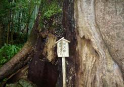 23楠大樹 70.jpg