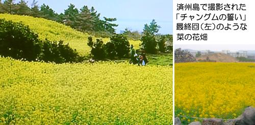 26チャングム菜の花+オールインハウスそば 100.jpg