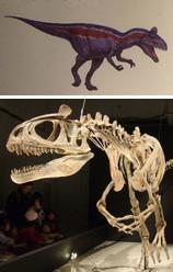 517クリオロフォサウルス+イラスト*45.jpg