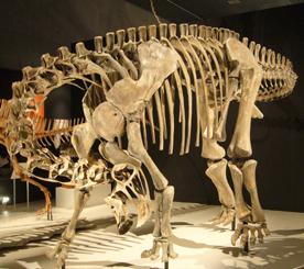 522ニジェールサウルス 70.jpg
