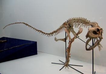 525スタウリコサウルス*70.jpg