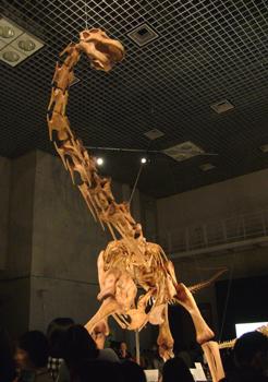 564マシャカリサウルス*70.jpg