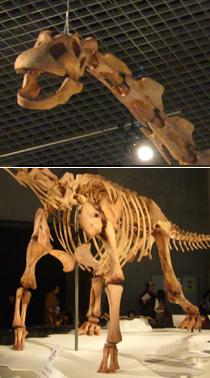 573マシャカリサウルス頭+体*60.jpg