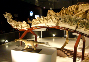 578トリゴノサウルス尾・実物*70.jpg