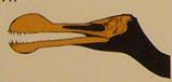 639イラスト トロペオグナトゥス*45.jpg