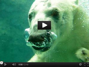 ①-3北極くまイワン君YouTube 298x24570.jpg