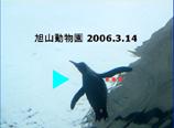 ぺんぎんback_main 45.jpg