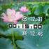 ストップタイマー03 待受古代ハス カメラ画像*20 8.9x.jpg