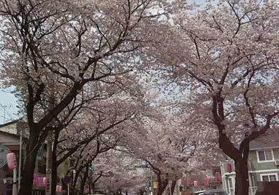 八ヶ崎桜並木1 80.jpg
