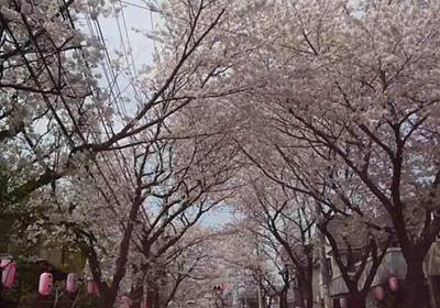 八ヶ崎桜並木2 80.jpg