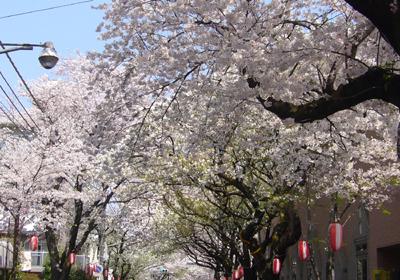 八柱桜並木2 2009.4.7 80.jpg