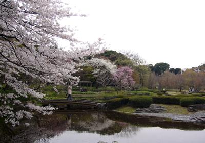 37 P1060146池と桜 80 8.9x12.7.jpg