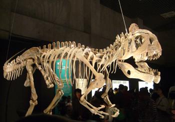 512クリオロフォサウルス 70.jpg