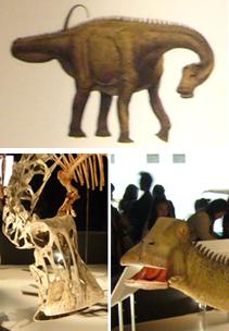 523ニジェールサウルス+生体+イラスト*60.jpg