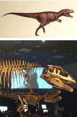 546マプサウルス成体・幼体+イラスト*45.jpg