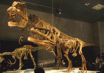557マプサウルス成体・幼体*70.jpg