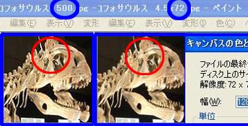 クリオロフォサウルス比較2 500VS72 70*.jpg
